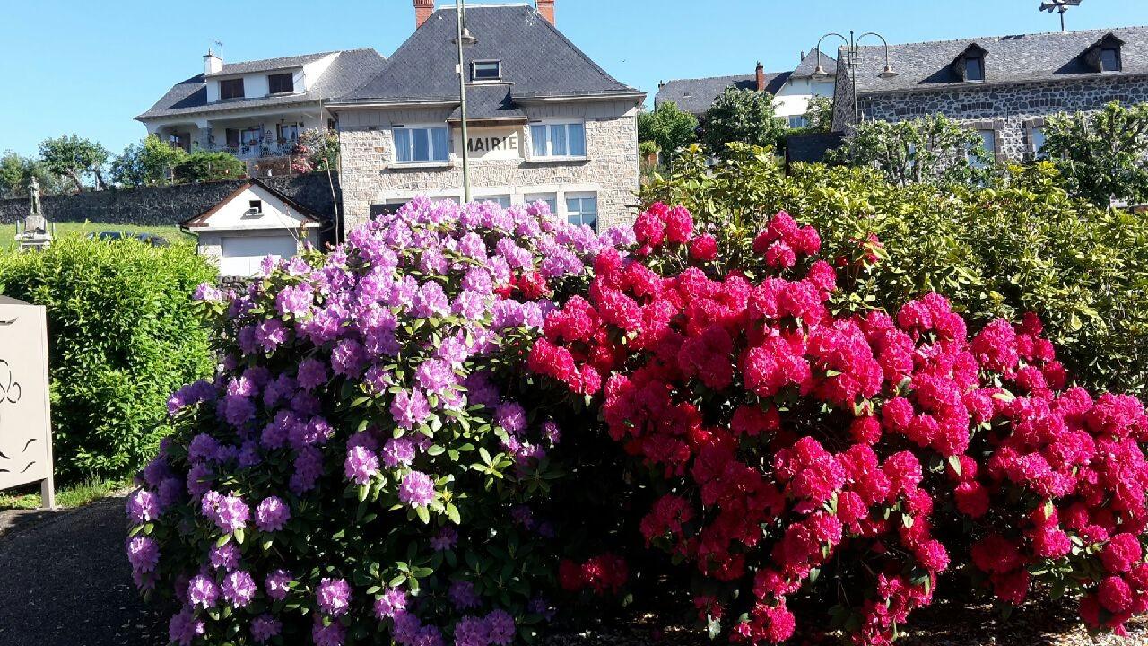 Les Rhododendrons devant la Mairie au départ du sentier-mai 2020